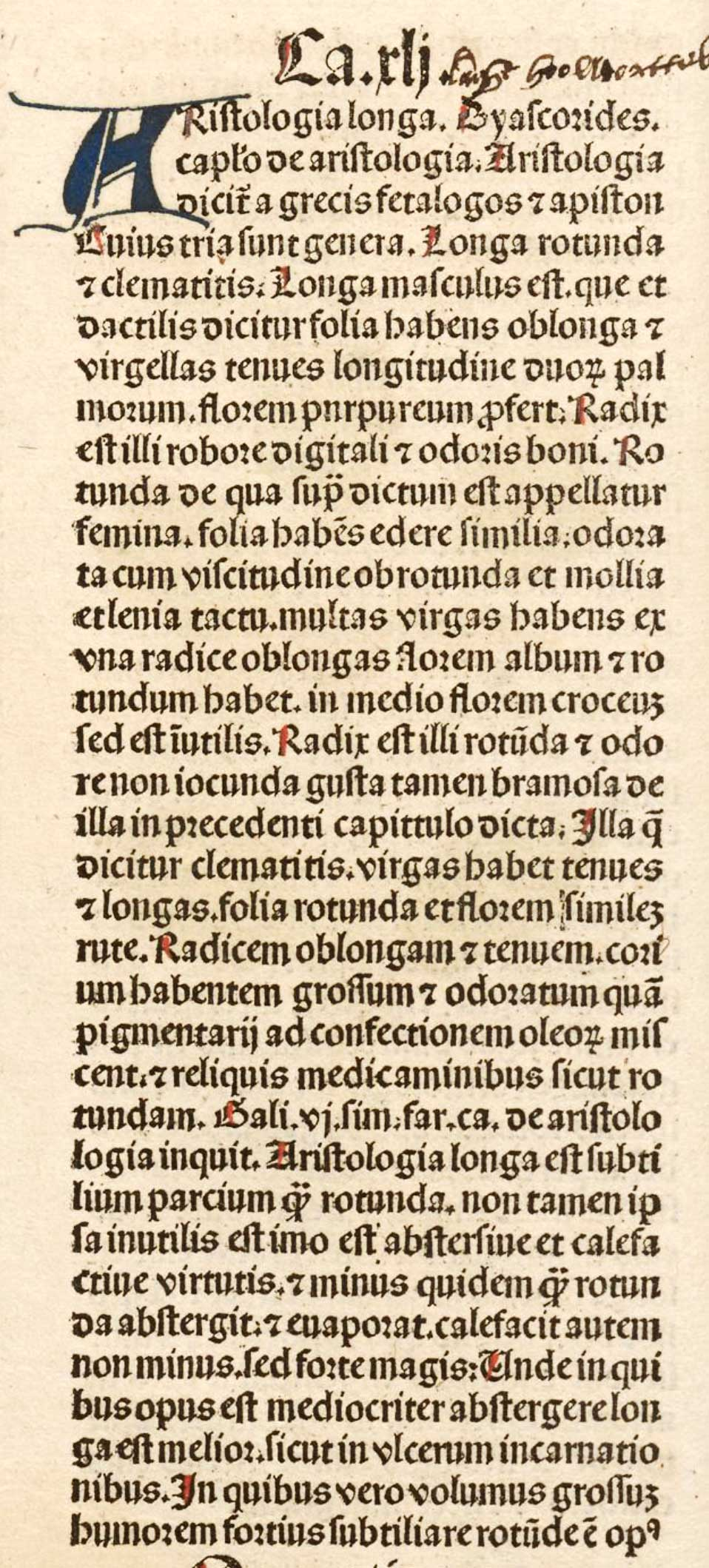 Aristologia longa (text)