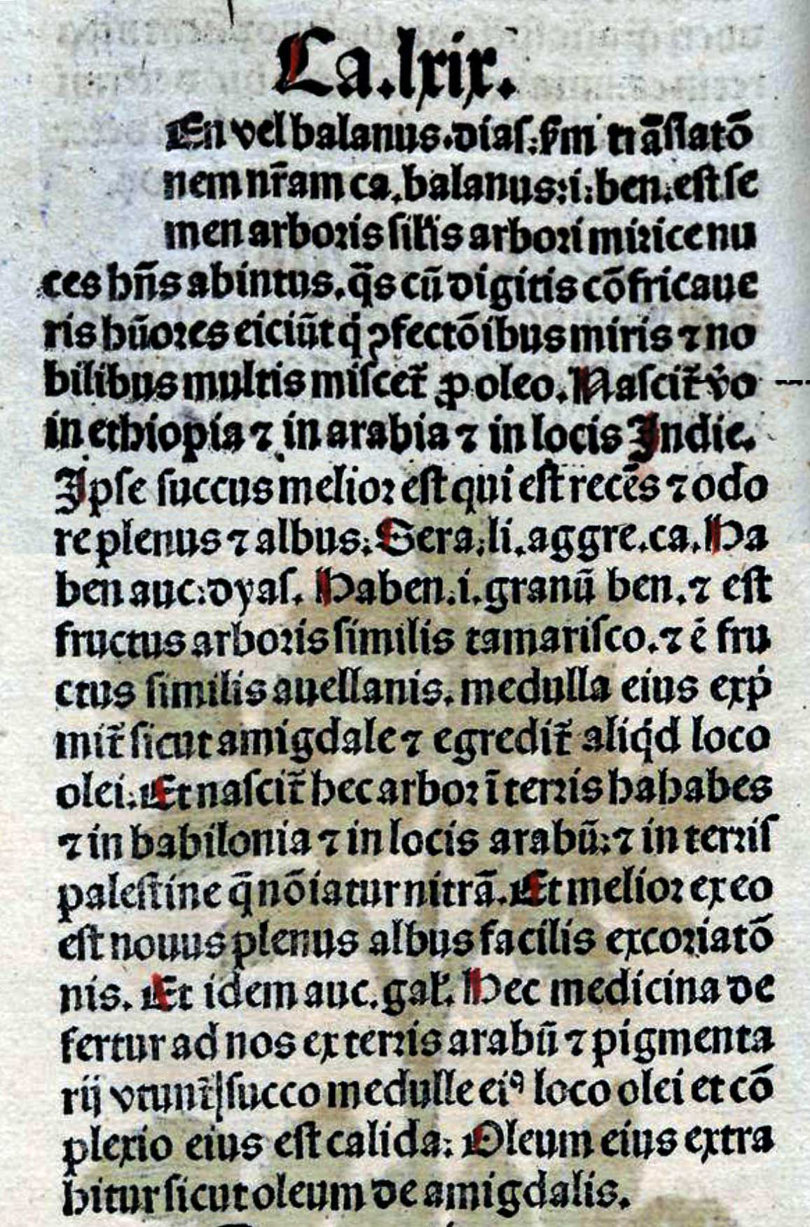 Balanus (text)